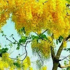 Vishu Greetings Wishes Quotes SMS Wallpaper Malayalees New Year Festival Gods Own Country Malayalam Live Channel