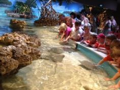 Touching the Rays at the New England Aquarium