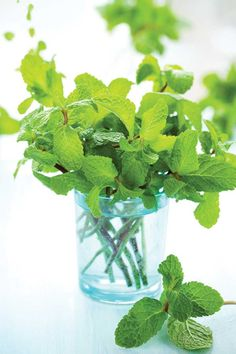 Discover 15 handy household uses for mint, an easy-to-grow herb.