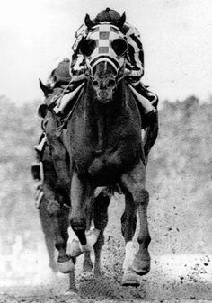 I was 12 when Big Red won the TC, I had a poster like this (in color) on my bedroom wall...ah, good memories!  Secretariat comes to the finish line in the 98th running of the Preakness Stakes with Ron Turcotte in the irons. Sham, with jockey Laffit Pincay, Jr., finished second.