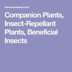 Companion Plants, Insect-Repellant Plants, Beneficial Insects