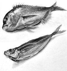 春期講習会で2年生が魚の鉛筆デッサンをしました。生臭い匂いの中で頑張って力作が生まれました。魚は特に質感が描け出したら、面白いモチーフ... Graphite Drawings, 3d Drawings, Animal Drawings, Still Life Sketch, Still Life Drawing, Illustration Botanique, Illustration Art, Landscape Pencil Drawings, Jellyfish Art
