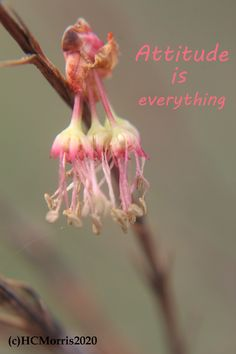 maple seed buds with words attitude is everything