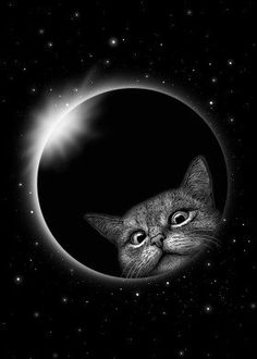 cat lunar moon eclipse fantasy black kitten stars universe