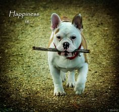 Happiness Is Photograph by Jordan Blackstone - Happiness Is Fine Art Prints and Posters for Sale #jordanblackstone, #fineartphotography, #dogphotography