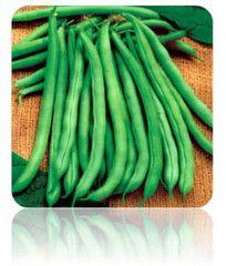 Bush Bean (Blue Lake) Seeds at $.99/pack | Grow Organic Beans NON-GMO