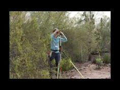 Measuring Saguaro Cactus at the Desert Botanical Garden