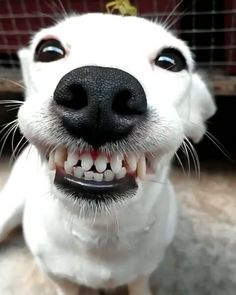 You have to have whiter teeth than this cute dog ;P You can check out our new product for natural way of whitening your teeth. http://karbonoir.si/