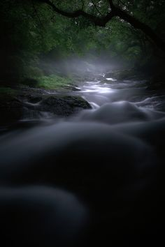 *Forest of Spirits by Junya Hasegawa
