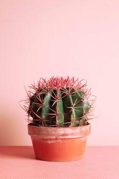 MY ATTIC voor vtwonen / plants on pink / Ferocactus Fotografie: Marij Hessel