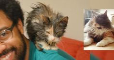 Kitten Who Was Brought Back from the Brink, Clings to Her Rescuers, Now 2 Years Later..