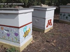 Grow with KARE: Flowers for bees