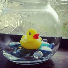 find a cool vase to hang on the wall with these stones to display rubber duck collection in kid bathroom
