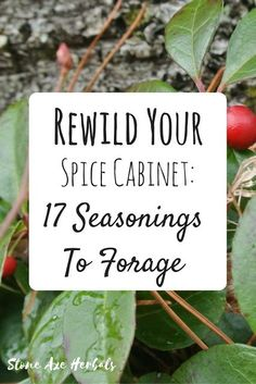 Stone Axe Herbals: Rewild Your Spice Cabinet: 17 Seasonings to Forage For
