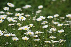 Γη και Ελευθερία.: Tα λουλούδια χαμογελούν μόνο όταν έρθει η αυγή. 2 Colours, Poetry, Plants, Poetry Books, Plant, Poem, Poems, Planting, Planets