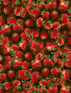 15 Yards in Stock - Timeless Treasures - Chocolate Covered Strawberries from the collection Sugar Rush - 100% Cotton