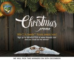Special Christmas GIVE AWAY worth 150€! Share and Go to www.thseeds.com to sign up for Newsletter. On 30th December we will choose two lucky winners!! WWW.THSEEDS.COM