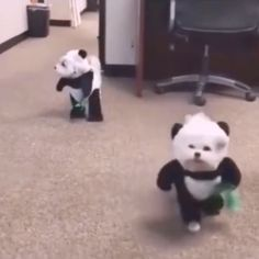 So funny videos Cute Baby Dogs, Cute Funny Dogs, Cute Funny Animals, Cute Puppies, Cute Babies, Funny Animal Memes, Funny Animal Pictures, Funny Humor, 9gag Funny