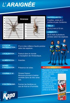 Insectes : Infographie Fiche d'identité de l'araignée (insecticides Kapo)