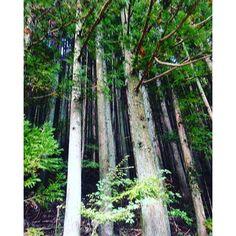 【jun_kamada】さんのInstagramの写真をピンしています。《Como eu adoro abraçar uma árvore 🤗😍🤗#jp#jpn#japan #japao#arvores #tree #floresta #mori #木#林#日本》