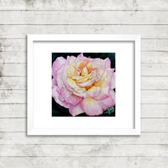 Rose with Water drops Available at: www.brynncarroll.com