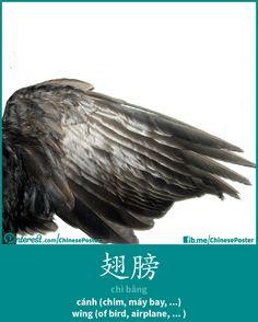 翅膀 - chì bǎng - cánh - wing