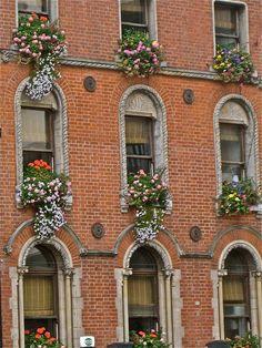 Dublin window boxes ... LOVE this!!!