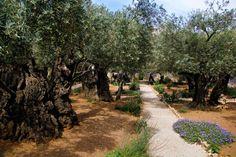 Huerto de Getsemaní, donde Jesús fue apresado
