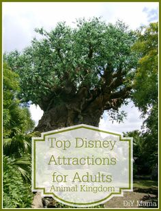 Top Disney Attractions for Adults: Animal Kingdom - DIY Mama