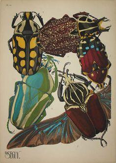Beetles Plate 11, Eugene Alain (E.A.) Seguy (1889-1985) from Insectes Editions Duchartre et Van Buggenhoudt, Paris: Mid 1920s Pochoir prints