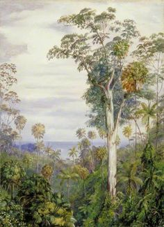 White Gum Trees and Palms, Illawarra, New South Wales by Marianne North Date painted: early 1880s