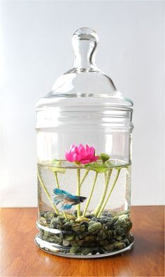 Betta/ Lotus Jar. Please no more comments- the lotus, not the tank, that I'm interested in