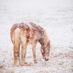 66 Enchanted Photos of Snow Around the World