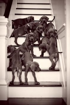 13 Not So Great Danes!!! http://get.worldofangus.com/13-not-so-great-danes?utm_content=buffer42e80 http://get.worldofangus.com/13-not-so-great-danes