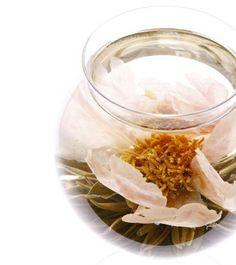 工芸茶専門店クロイソス -CroesuS- 「ヴィーナス ~Venus~」   大輪の牡丹がエレガントに姿を現します。 まるでヴィーナスの誕生のように。大人の女性に贈ります。  茶種:緑茶 花種:牡丹 産地:中国福建省   ¥360   http://mercure.shop-pro.jp/?pid=21616618