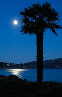 Sausalito California moonlight
