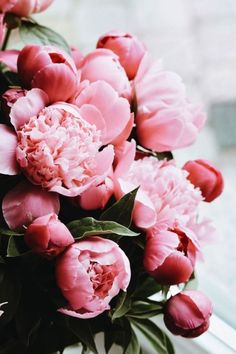 Good Photos Pink Flowers fondos Thoughts If you want flowers with an attractive . Good Photos Pink Flowers fondos Thoughts If you want flowers with an attractive hue and lively feeling, try various Flowers Nature, Fresh Flowers, Spring Flowers, Beautiful Flowers, Pink Nature, Piones Flowers, Exotic Flowers, Beautiful Images, Flower Wallpaper