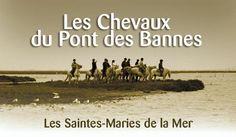 Les chevaux du Pont des Bannes en Camargue  www.chevaux-pontdesbannes.camargue.fr