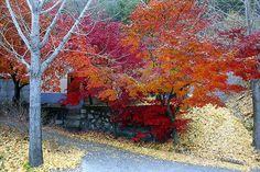 800px-Korea-Andong-Maple_trees_near_Andong_Lake_in_autumn-01.jpg (800×534)