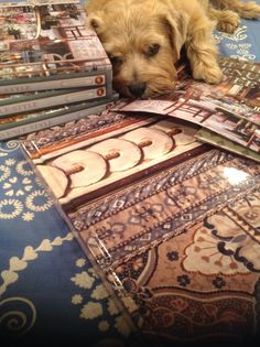 Norfolk terrier model Winnie Slatkin posing (reluctantly) with her dad's book FIFTH AVENUE STYLE