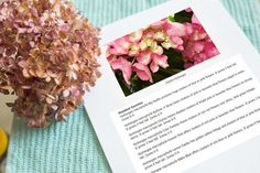 You can change the blossoms of Hydrangeas (Hydrangea spp.) from pink to blue by increasing the acidity of the soil. While adding coffee grounds may reduce soil pH, making it more acidic, the effect is temporary. Using coffee grounds as compost or mulch may benefit these perennial flowering shrubs.