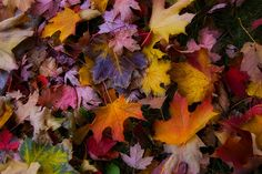 Beautifuly coloured leaves