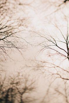 winter sky through branches