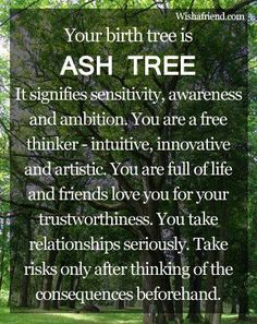 Ash Birth Tree