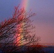 Rainbow on Bailey Island by Donnie Freeman