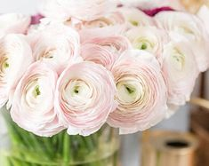 Growing Hibiscus, Persian Buttercup, Purple Hibiscus, Hibiscus Plant, Ranunculus Flowers, Blush Flowers, Seed Packaging, Rose Pale, Buy Plants