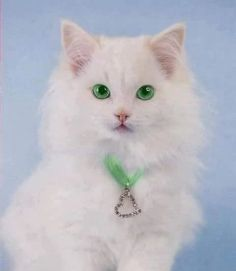 Beautiful cat - green eyes