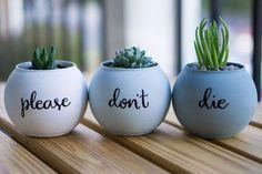 69 Excellent DIY Small Cactus Succulent Decoration Ideas (11)