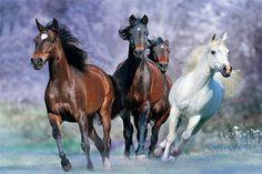 Koşan atlar ev dekorasyonu klasik moda film stili özel ücretsiz nakliye poster baskı boyutu( 40x60) cm duvar sticker u676766(China (Mainland))