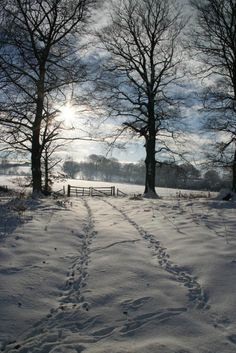 Sunshine in winter, Howardian Hills, Yorkshire, England-I just love these kind of pictures.miss snow in the winter. Winter Szenen, I Love Winter, Winter Magic, Winter Walk, Winter Light, I Love Snow, Snow Scenes, Winter Beauty, Winter Pictures